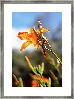 Towards The Sun Framed Print
