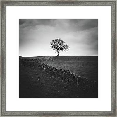 Towards The Tree Framed Print