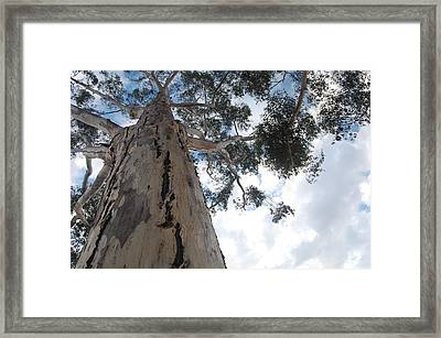 Tower Framed Print by Jean Booth