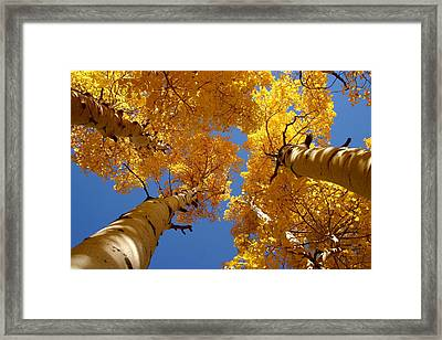 Framed Print featuring the photograph Towering Aspens by Perspective Imagery
