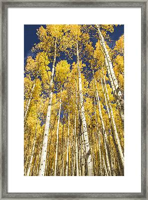 Framed Print featuring the photograph Towering Aspens by Phyllis Peterson
