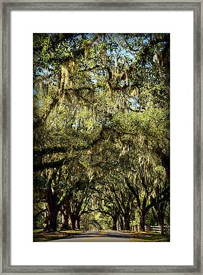 Towering Canopy Framed Print