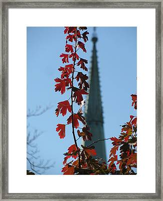 Towering Leaves Framed Print by Alfred Ng