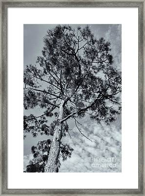 Framed Print featuring the photograph Towering by Linda Lees