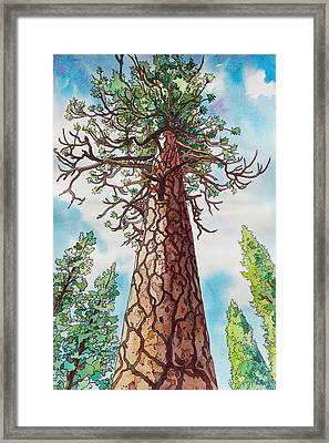 Towering Ponderosa Pine Framed Print by Terry Holliday