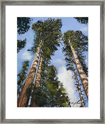 Towering Sequoias Framed Print
