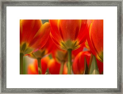 Framed Print featuring the photograph Towering Tulips  by Julie Andel