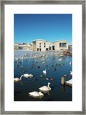 Town Hall And Swans In Reykjavik Iceland Framed Print by Matthias Hauser