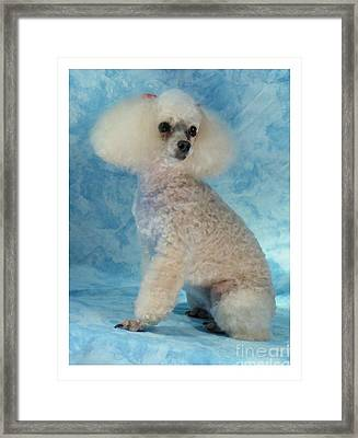 Toy Poodle - Miniature Poodle 163 Framed Print by Larry Matthews