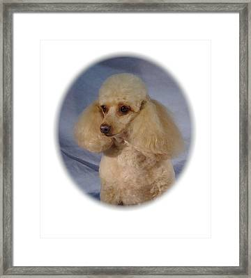Toy Poodle - Miniature Poodle 723 Framed Print by Larry Matthews
