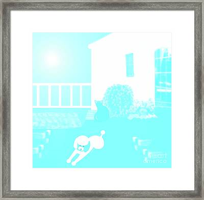 Toy Poodle Louie And Black Cat Jessica In The Yard Framed Print