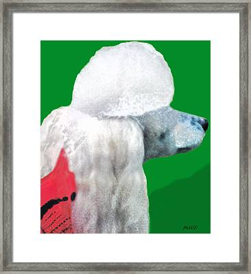 Toy Poodle Louie In His Red Sweater Framed Print