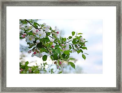 Trace Of Pink Framed Print