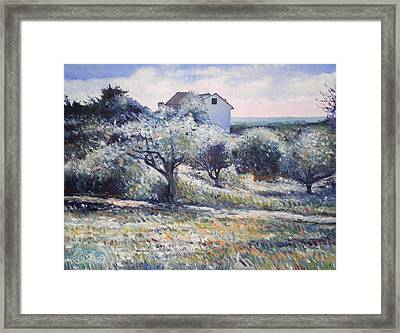 Track Leading Alongside Orchard With Farmhouse Near Monte Cardeto Italy 2009 Framed Print by Enver Larney