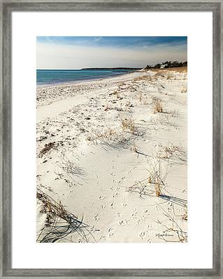 Tracks On The Beach Framed Print by Michelle Wiarda
