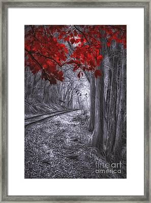Tracks Through The Forest Framed Print