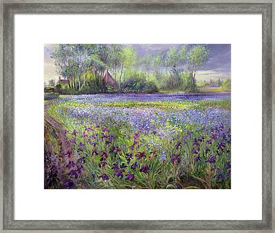 Trackway Past The Iris Field Framed Print