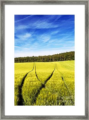 Tractor Tracks In Wheat Field Framed Print