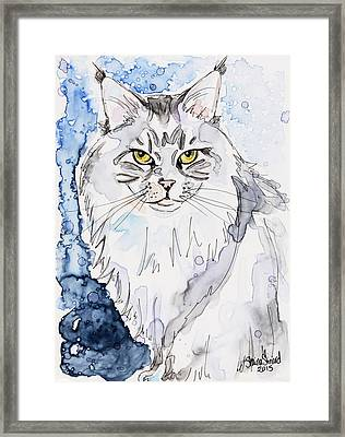 Trader The Maine Coon Framed Print by Shaina Stinard