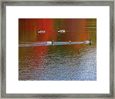Traffic Moving Well In Both Directions At Connetquot State Park Framed Print