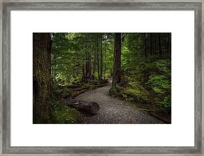 Trail Around Ward Lake Ketchikan Alaska Framed Print by Michael J Bauer