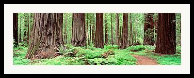Founders Tree Framed Prints