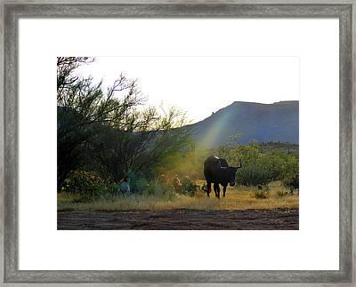 Trail Boss Framed Print by Gordon Beck