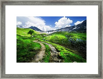 Trail Into The Mountains Framed Print