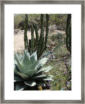 Trail Of Cactus Framed Print