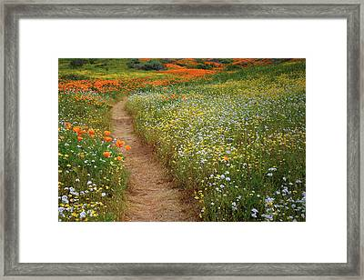 Framed Print featuring the photograph Trail Of Wildflowers At Diamond Lake In California by Jetson Nguyen
