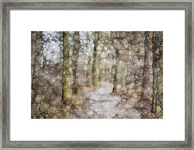 Trail Series Framed Print by Jack Zulli