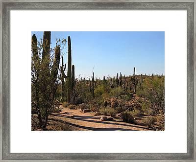 Trail Shadows Framed Print