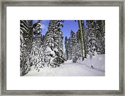 Trail Through Trees Framed Print by Garry Gay