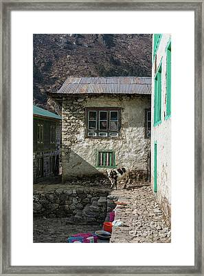 Trail To Everest - Cow In Phakding Nepal Framed Print by Mike Reid