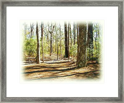 Trail Walk Framed Print by Nereida Slesarchik Cedeno Wilcoxon