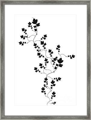 Trailing Leaves Framed Print