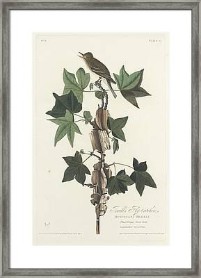 Traill's Flycatcher Framed Print