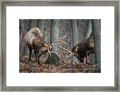 Training 101 Framed Print