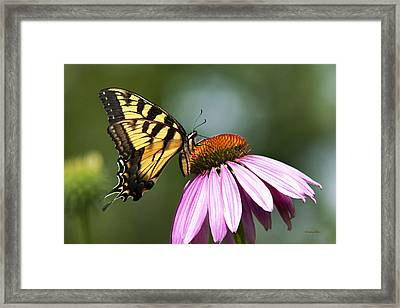 Tranquil Butterfly Framed Print by Christina Rollo