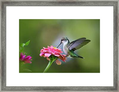 Tranquil Joy Framed Print