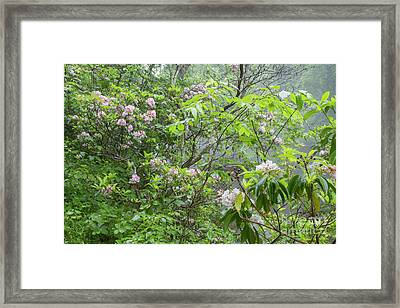 Framed Print featuring the photograph Tranquil Nature by Chris Scroggins