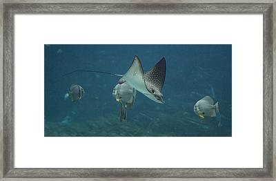 Tranquil Sea Creatures Framed Print by Betsy Knapp