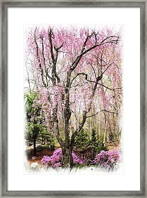 Tranquil Spring Moment Framed Print by Daphne Sampson