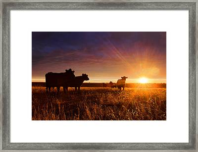 Tranquil Framed Print by Thomas Zimmerman