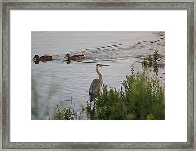 Tranquil Waterlife Framed Print by Cathy  Beharriell