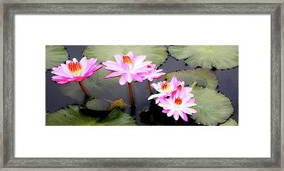 Framed Print featuring the photograph Tranquility by Carol Kinkead