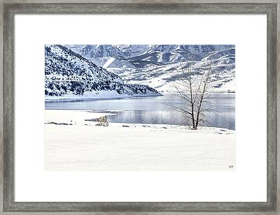 Tranquility Framed Print by David Millenheft