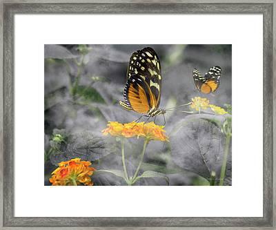 Tranquility Garden Framed Print by Betsy Knapp