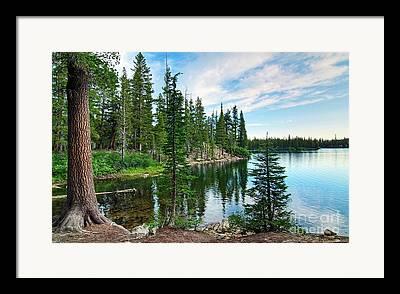 Pine Framed Prints