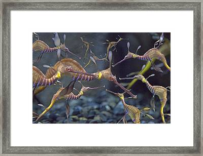Tranquility Under The Sea Framed Print